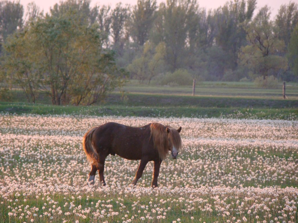 "Лошадиная ферма на базе отдыха ""Березовка"""